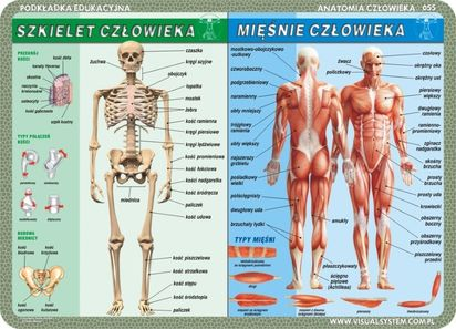 Podkładka Edukacyjna Dwustronna Człowiek Szkielet Mięśnie Zmysły Mózg